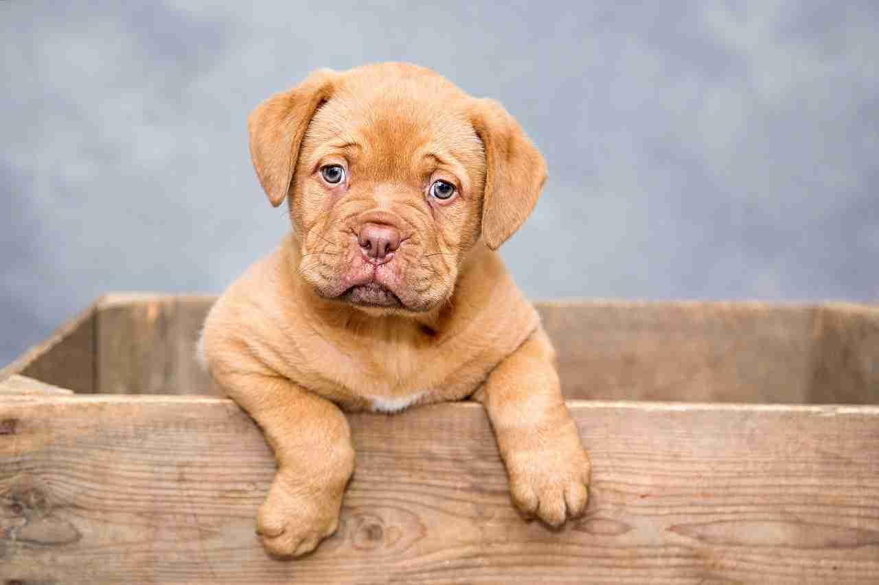 Hoe maak je een hondenmand van steigerhout